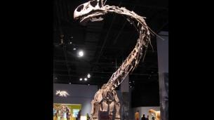 «Dinopétrea» en el Pabellón de la Navegación